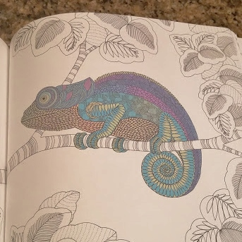 Coloring Book Review: Animal Kingdom and Tropical World by Millie Marotta The BiblioSanctum