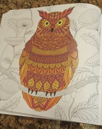 Coloring Book Review Animal Kingdom And Tropical World By