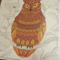 Coloring Book Review: Animal Kingdom and Tropical World by Millie Marotta