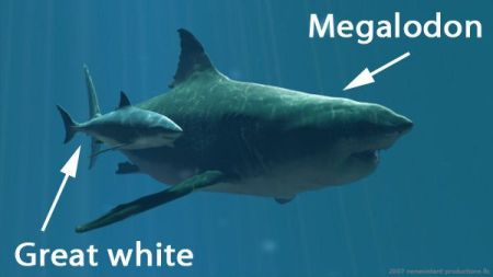 Megalodon vs Great White